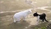 Chat Drole Ninja Bruce Lee-Funny Ninja Cat Bruce Lee (Chat Drole -Funny Cat)