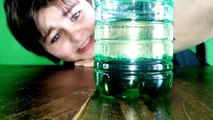 Xander Sims 4th Grade Oil And Water Science Project | 4th grade science projects,|  science project,