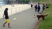 Funny Animal Videos   Dog Plays Soccer   Funny Dog Videos   Best Funny Animals Compilation