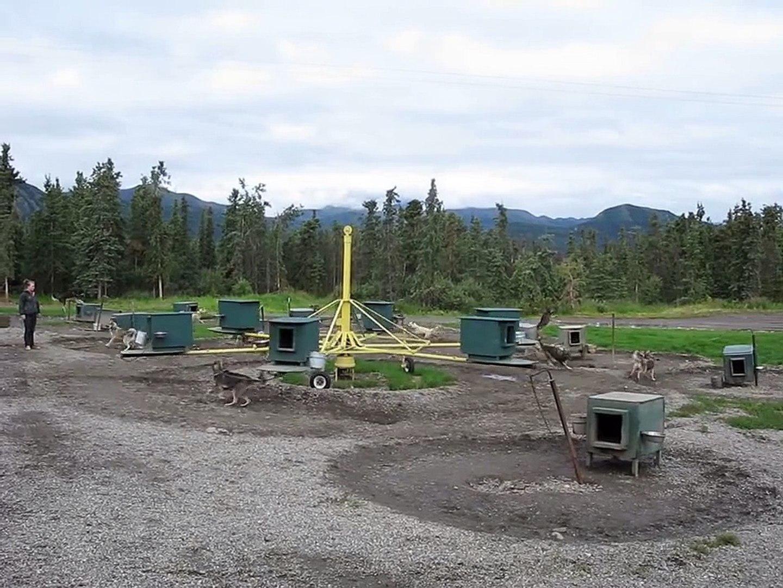 Alaskan Husky Merry-Go-Round