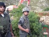Israeli army uprooting trees, Artas village May20 morning