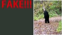 Closer Look - Fulton County trail-cam Bigfoot photo