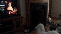 Puppy barking at Bigby Wolf (Wolf Among Us)