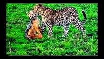 National Geographic Documentary Wild Animals attack National Geographic Animals ✔ ► P 11