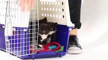 Mira lo que pasa cuando perros y gatos bebés se encuentran por primera vez