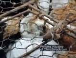 1300 Cats Rescued  Best Wild Animal Videos