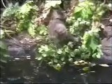 Auckland Zoo's less filmed animals. 3. Macaque