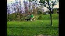 Ce chien attaque son maître avec le tuyau d'arrosage