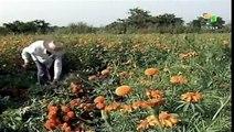 Peligra seguridad alimentaria por acaparamiento de tierras
