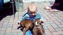 Funny babies annoying dogs   Cute dog & baby compilation