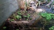 les reptiles du parc zoologique de Paris (Vincennes)