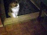 Last words of my cat Nikki for her dead friend (letzte Worte für einen toten Freund)