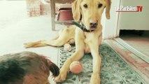 Grand élan de solidarité pour Lucky, le chien affamé