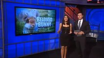 Natick rabbit goes viral with Instagram account