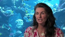 Science Today: Mimic Octopus | California Academy of Sciences