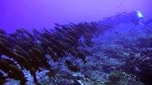 Wall of Sharks - Fakarava South Pass (Tomakohua) - le mur de requins Fakarava Polynésie Française