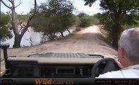 WildEarth Safari: Elephants at the Waterhole (Wild Safari and Djuma cams)