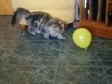 """Mi Gata Lola - """"Un globo, dos globos, tres globos..."""""""