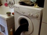 Cat and the washing machine