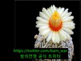구파발립카페【 밤워 】강남립카페 별다방 め 〈청량리립카페〉
