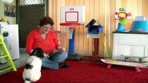 Lagotto Romagnolo puppy Lilly 9 weeks old Novice Trick Dog Title