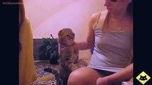 FUNNY VIDEOS Funny Cats Funny Cat Videos Funny Animals Cute Pets LOL