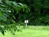 EXTREMELY DISTURBING SASQUATCH VIDEO - ( BIGFOOT CAUGHT ON TAPE )