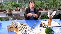 how its made s6 ep1- artifical bonsais
