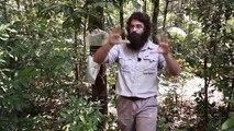 Changement climatique : quel impact sur la gestion forestière en Guyane ?