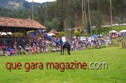 Hermosos Caballos en Ecuador - Horses Show (The most beautiful horses in the world)