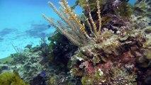 SCUBA Diving Russel Island Reef near Eleuthera, Bahamas