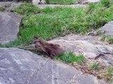 Ecotarium Visit - Otters make some interesting noises!