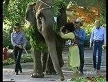 Elizabeth Taylor at Neverland giving Michael Jackson an elephant !