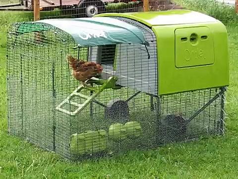 Chicken keeping – Chicken Antics