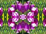 Jimmy's Best Tulip (Estonian Waltz/La Vie Est Pas Donné/La Bastringue by Phil Cunningham & Aly Bain)