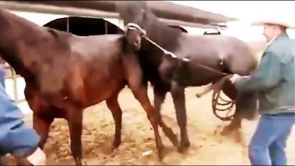 hunde paarung frau tiere