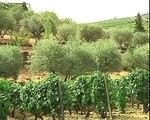 São João da Pesqueira, produção de azeite na Quinta de Vargellas