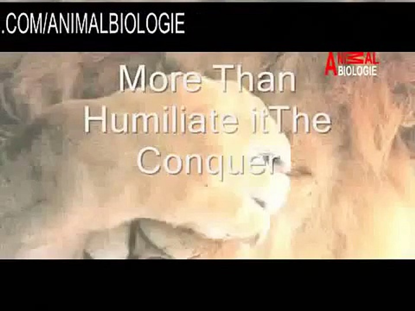 Wildlife Nature Documentary Africa Animals : Lions, Hyenas, Buffalo, Elephant was Hunting