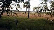 Top 3 Bigfoot Videos Of March 2013 Myakka Skunk Ape? Russian Bigfoot? Tree Pushing Bigfoot?