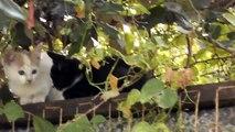 super ultra cute kittens kitty cats white black orange