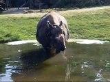 Rhinoceros  Munich Zoo - Rhinozeros Tierpark Hellabrunn