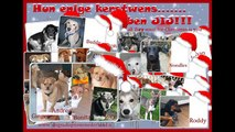 Dogs Adoptions Nederland: puppies puppies puppies, and all they want for Christmas is YOU!!!!!