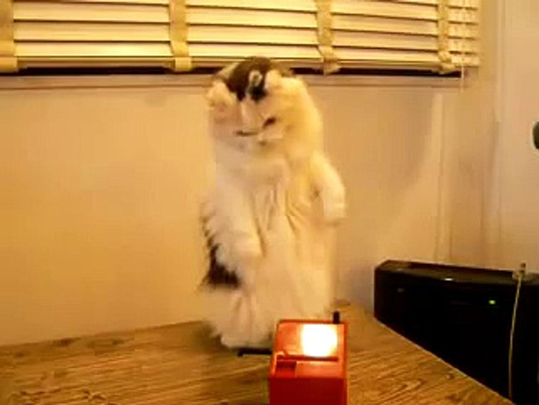 Кошка и музыка