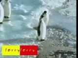 Pingouin humour - funny penguin
