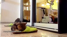 FANNY CATS VIDEO   FANNY CATS COMPILATIONS   FANNY VIDEO   Funny Animals Funny Pranks Funny Fails 72