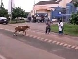 Funny People chasing sheep - Funny Animals chasing people