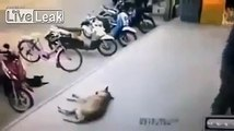 Asshole kicks sleeping dog but the Dog don't take that shit