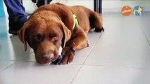 Más que mascotas - Perros de biodetección - Más que perros y gatos 13