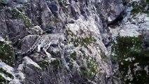 El Leopardo de las nieves de caza HD