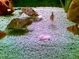 Convivenza tartarughe e pesci